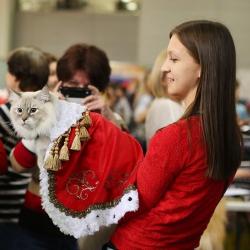 Международная выставка кошек «Кэтсбург-2017» в Московском выставочном центре «Крокус Экспо».