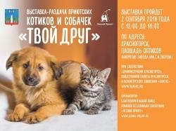 Дог-шоу и раздача приютских животных пройдут на площади Оптиков.